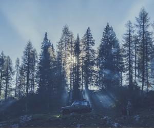 paisaje con pinos noche